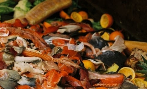 An Introduction To Food Waste